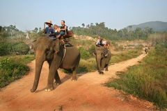 Elephants trip Royalty Free Stock Image