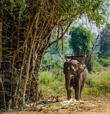 Elephants in the tropical forest Stock Photography