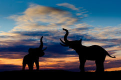 Elephants trumpeting Stock Photography