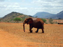Elephants in Tsavo Royalty Free Stock Photos