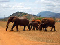 Elephants in Tsavo Stock Photography