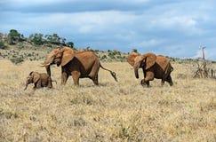 Elephants of Tsavo Stock Photo