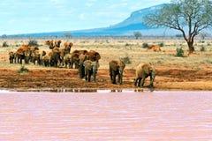 Elephants Tsavo East Stock Images