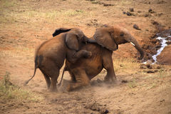 Elephants in Tsavo East Park Royalty Free Stock Image
