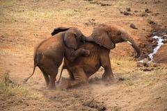 Elephants in Tsavo East Park. Kenya africa Royalty Free Stock Image