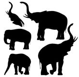 Elephants vector Royalty Free Stock Photo