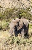 Elephants in vertical Stock Image