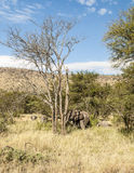 Elephants in vertical Stock Images