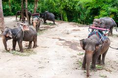 Elephants waiting to start the tours with tourists in Kanchanaburi, Thailand Stock Images