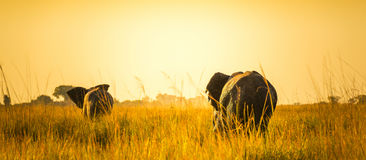 Elephants Walking Away On African Plains Stock Images