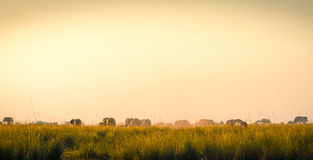 Elephants Walking Away On African Plains Royalty Free Stock Photography