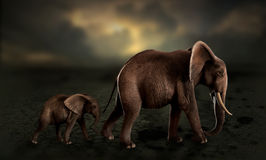Elephants walking baby elephant in desert. Elephants walking in line, baby elephant following mother through a desert suffering drought Royalty Free Stock Photo