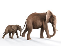Elephants walking baby elephant. Elephants walking in line, baby elephant following mother on white background Stock Photos
