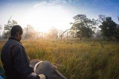 Elephants walking Royalty Free Stock Image