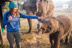 Elephants walking Royalty Free Stock Photos