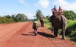 Elephants walking Stock Image