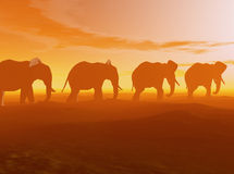 Elephants walking at sunset. A line of elephants silhouetted by the setting sun.  3D models, computer generated image Royalty Free Stock Image