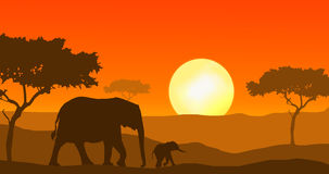Elephants walking in sunset. Elephant mother and calf silhouette walking in african sunset Stock Images