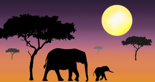 Elephants walking in sunset. Elephant mother and calf silhouette walking in purple coloured african sunset Stock Photo