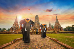 Elephants at Wat Chaiwatthanaram temple in Ayuthaya royalty free stock photo