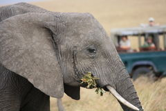 Elephants watched on from jeep Stock Photo
