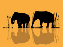 Elephants in the water. Background illustration with wild elephants crossing water Stock Photo