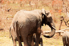 Elephants and water hole Royalty Free Stock Image