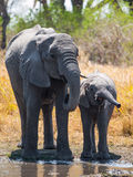 Elephants at water hole Stock Photos
