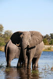 Elephants at a waterhole Stock Photos