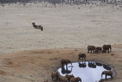 Elephants by the waterhole Stock Image