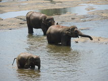 Elephants at a waterhole Stock Image