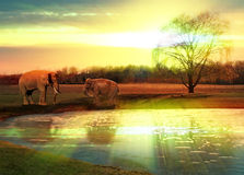 Elephants at watering hole. Father and baby elephant at watering hole at sundown scene Stock Images