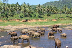 Elephants on a watering place Royalty Free Stock Photography