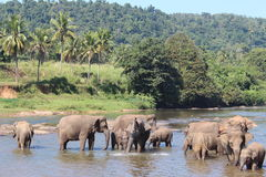 Elephants on a watering place Royalty Free Stock Photos
