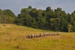 Elephants in Wild Stock Image