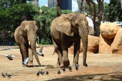 Elephants in the Zoo Stock Photo