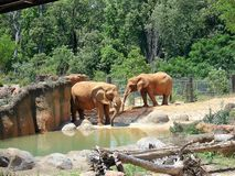 Elephants at zoo Stock Image