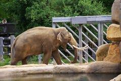 Elephants at the zoo Stock Photo