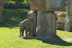 Elephants in ZOO Royalty Free Stock Photography