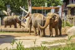 Elephants at Zoo stock photos