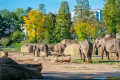Elephants in a zoo outdoors Stock Image