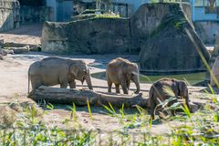 Elephants in a zoo outdoors Royalty Free Stock Photos