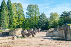Elephants in a zoo outdoors Stock Photo