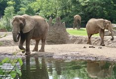 Elephants at the Zoo. PITTSBURGH, PENNSYLVANIA USA. Photo of 3 elephants walking around their habitat at the Pittsburgh Zoo and Aquarium stock image