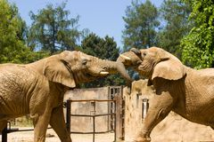 Elephants in the zoo Royalty Free Stock Image