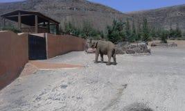 Elephants in a zoo. Wildlife in oasi park in fuerteventura Stock Photo