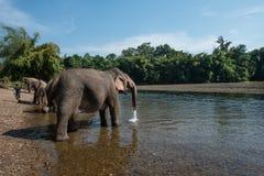 ElephantsWold Royalty Free Stock Image