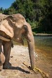 ElephantsWorld泰国 库存图片