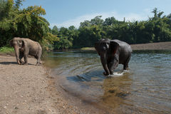 ElephantsWorld Photographie stock libre de droits