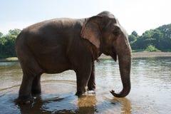 ElephantsWorld Kanchanaburi Thailand Royaltyfria Foton